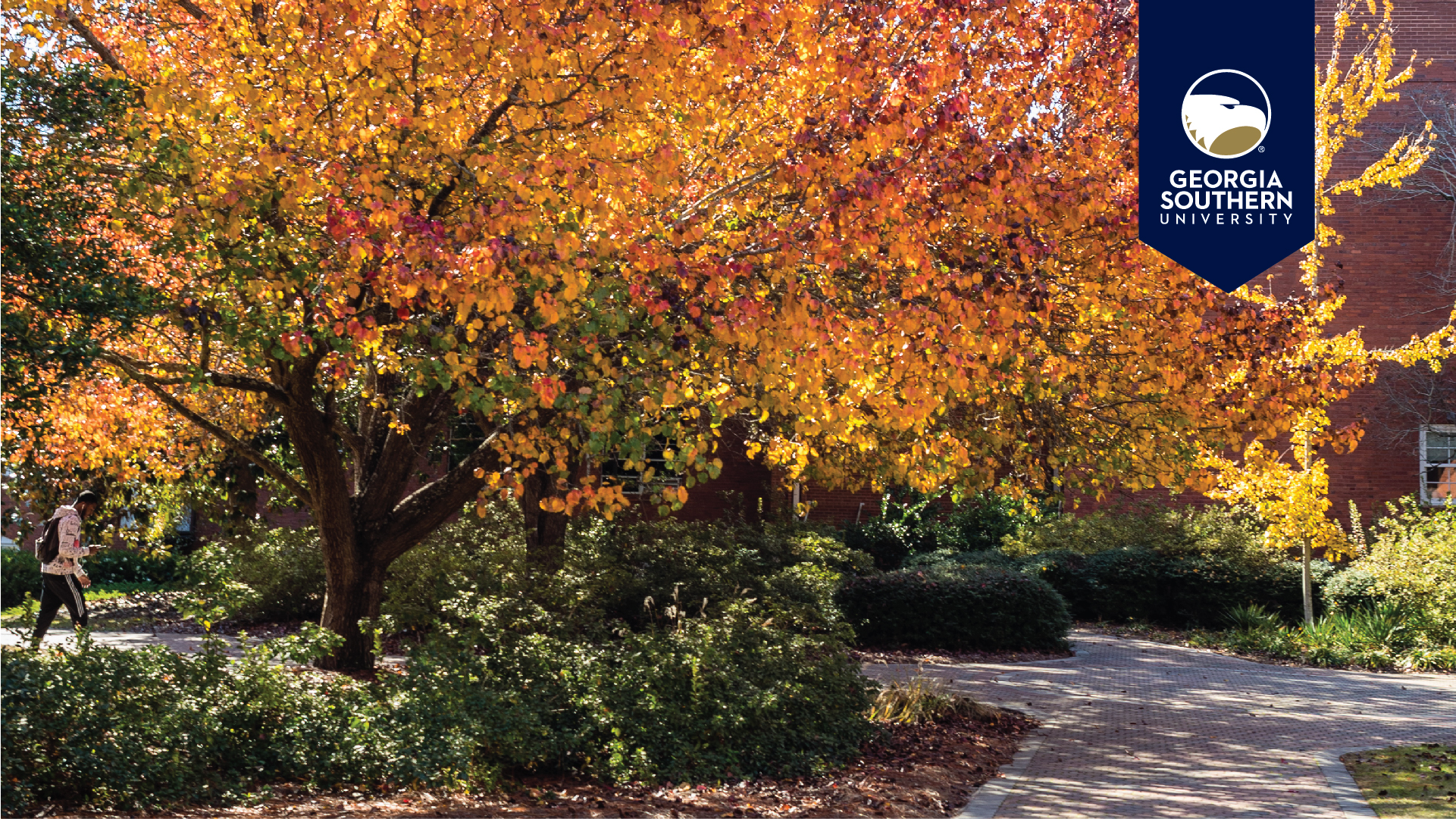 download a zoom background of a large tree with Autumn foliage
