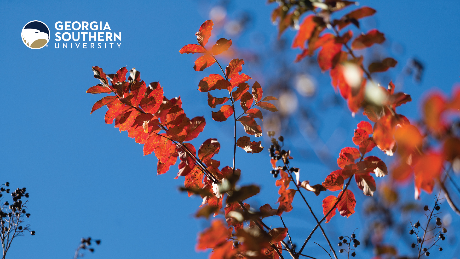 download a zoom background of a Autumn branch