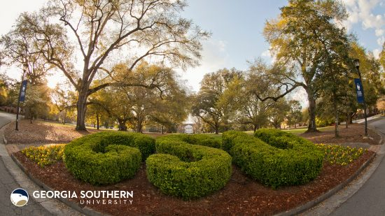 download a zoom background of the gsu topiary