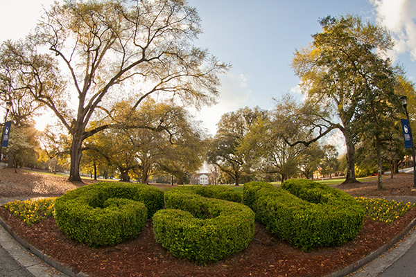 bushes spelling out GSU in the middle of sweetheart circle