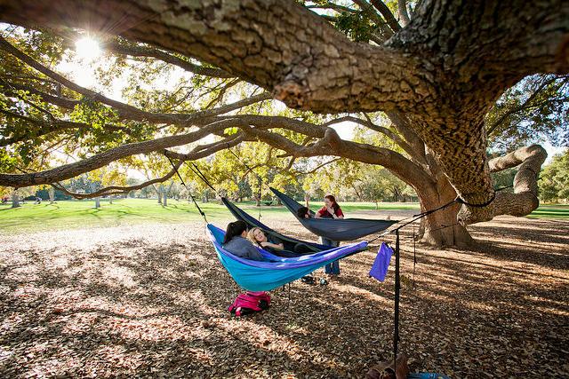 students on hammocks