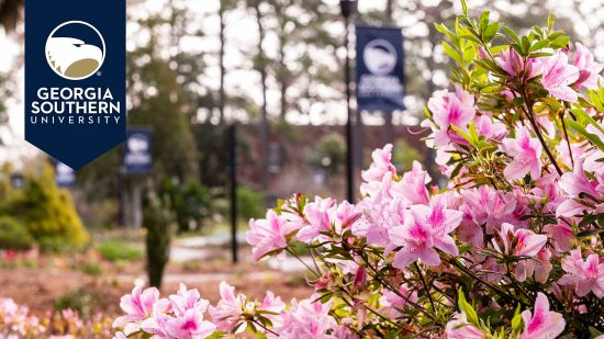 download a zoom background of a bush of pink flowers on campus