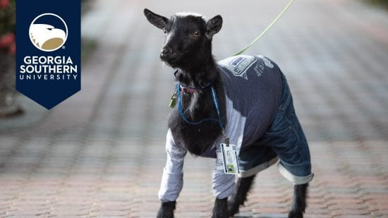 download a zoom background of a goat in clothing