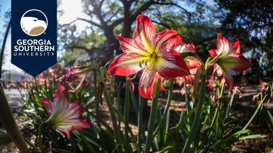 download a zoom background of lilies on the statesboro campus